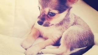 Фото собачек)❤