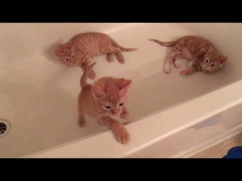 Crazy Kittens Love Water! My 8 Week Old Foster Kittens :)