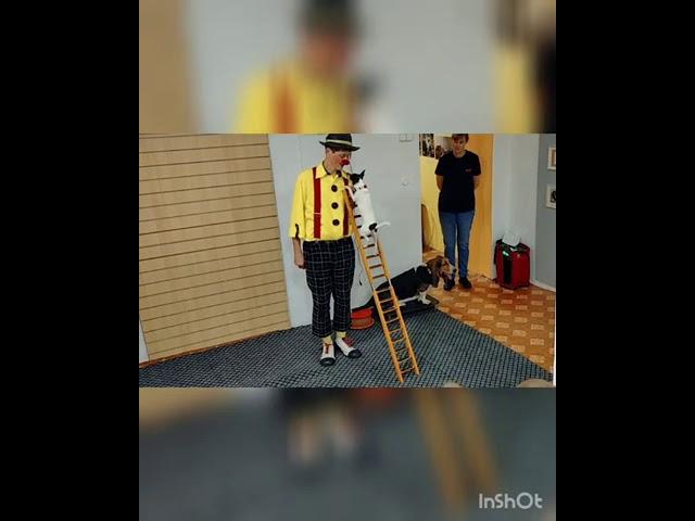 Мастер-класс по цирковой дрессировке 27 сентября