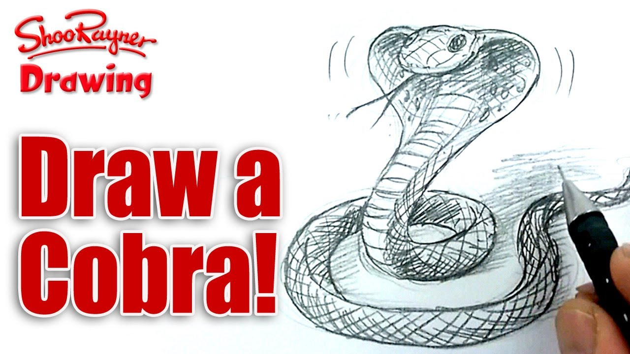 how to draw out a snake