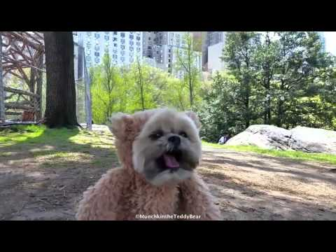 Munchkin The Teddy Bear Goes to New York