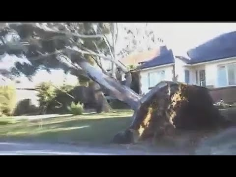 TERRIFYING SYDNEY REGION WIND STORM - THE BIG 30 TONNE TREE SD