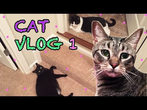 Cat Vlog 1  Cats have a Nerf Gun  The Life of My Cats