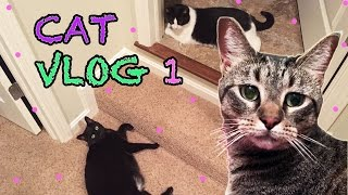 Cat Vlog 1 / Cats have a Nerf Gun / The Life of My Cats