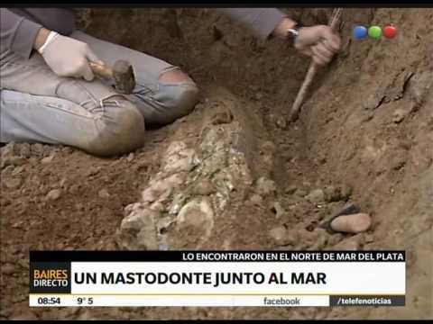 Hallaron restos de un mastodonte en Mar del Plata - Telefe Noticias