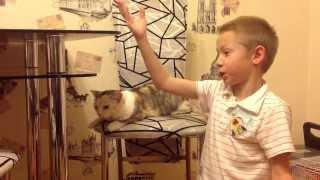 Анекдоты для кошки