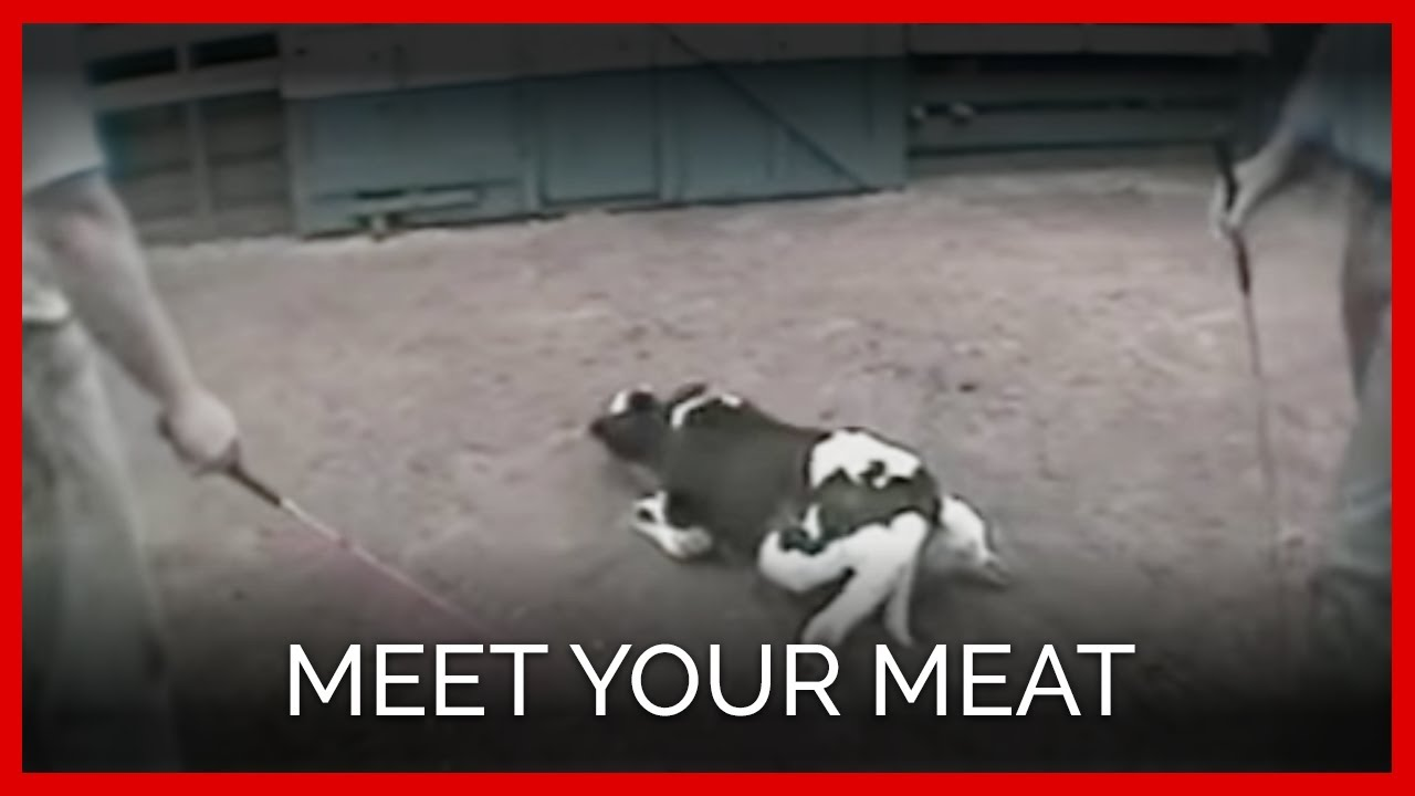 petatv meet your meat youtube