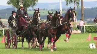 HIPPOEVENT - CAI Altenfelden 2013 Promotion Video