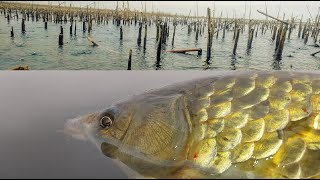 3 КИЛОГРАММОВЫХ болотных монстра в дождь Frenzy Fisher