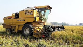 Crazy Driver of Old TX 36 Combine Harvester Cutting Rice Crop