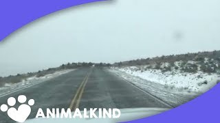 The largest elk stampede we've ever seen