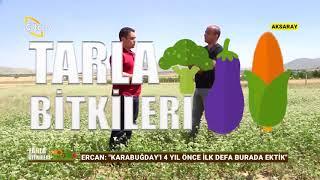 Karabuğday Bitkisinin Önemi - Tarla Bitkileri / Çiftçi TV