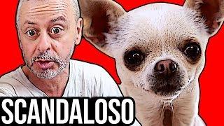 Siete pronti? Oggi io e Canepazzo reagiremo al nuovo videoclip musi...