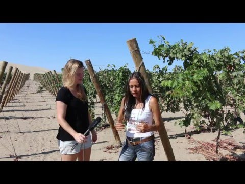 wine article Vines vs Sand Peruvian wine in the desert