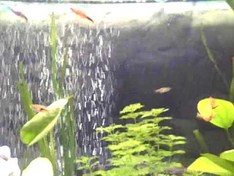 Unser 200l aquarium s wasser mit sprudelstein youtube for Aquarium 200l