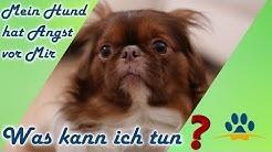 ❌ Dein Hund hat Angst ❗ vor dir ❓ 3 wichtige Tipps um das Vertrauen zu dir aufzubauen und zu stärken