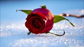 A Kiss From A Rose (Guitar Instrumental Version)
