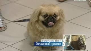 Вести-Хабаровск.  Клещи атакуют собак