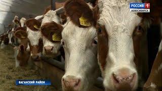 В хозяйствах Новосибирской области модернизируют животноводческие комплексы