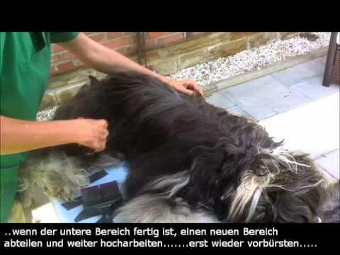 Pflege-Video1  -Tibet Terrier komplett-  (Grooming Tibetan Terrier)