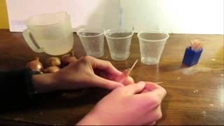 Shallot (Ingredient)