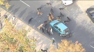 Curiosidades de la marcha: Perros callejeros