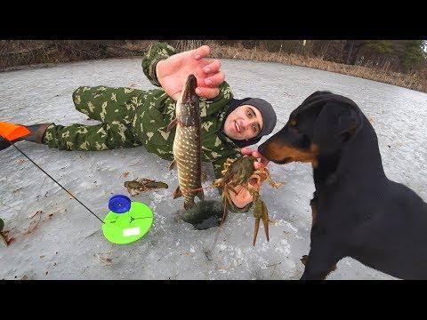 Зимняя рыбалка на жерлицы! Готовлю Мяки Тако!Ловля раков в камышах на палку