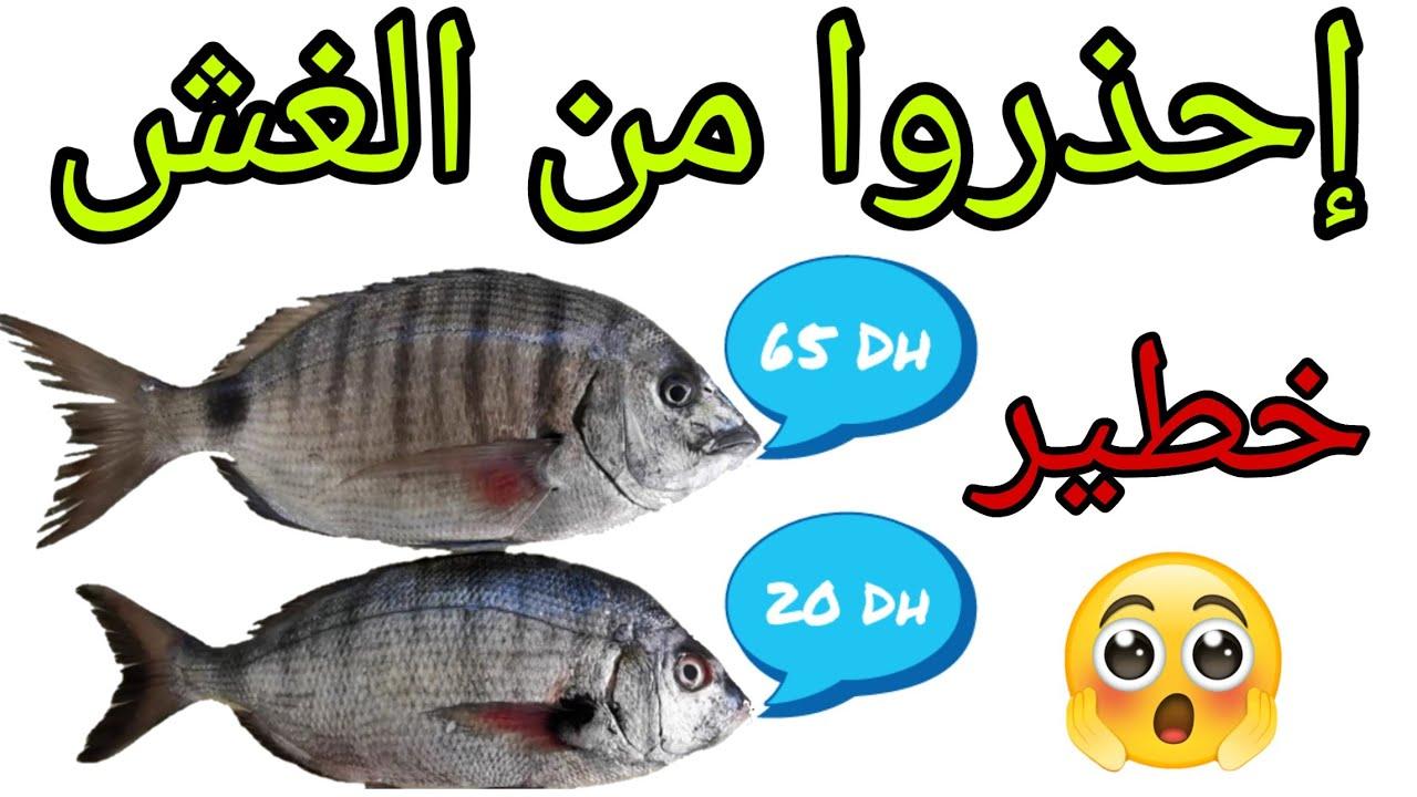 سمك الأخطبوط أزايز أنواعه ومميزاته وفوائده وأثمنته Poisson Poulpe Ou Pieuvre Youtube