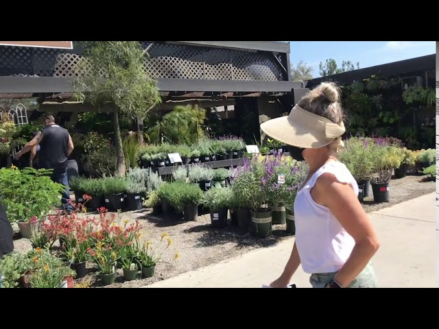 Touring Roger's Gardens and Halloween Boutique