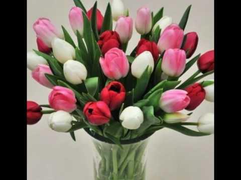 Karangan Bunga Tulip Yang Indah Dan Menawan Youtube