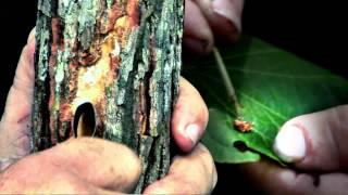 Institucional | Ervas e Plantas | Amazon Sat