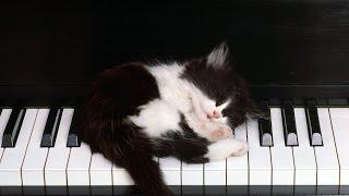Музыка для сна, стресс