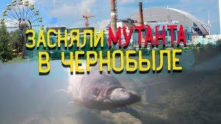 Оставил камеру в реке ПРИПЯТЬ Сняли рыбу мутанта в Чернобыле