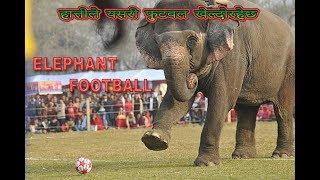 Download Video Elephant Football, 2017 MP3 3GP MP4