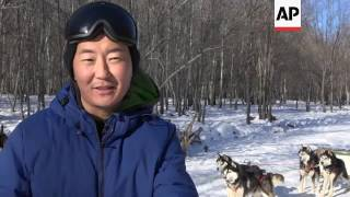 Dog sledding offers a wintry adrenaline rush