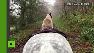 Un cavalier pas comme les autres