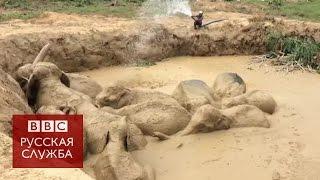 Как спасали утопающих слонов в Камбодже