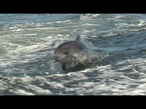Marine dolphin tour from Walvis Bay (Mola Mola Safaris)