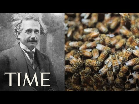 Time Explains: Why Bees Are Going Extinct | TIME