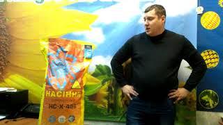 Обзор семян подсолнечника  НСХ 496 и НСХ 498 под Гранстар купить в Украине 2018 год
