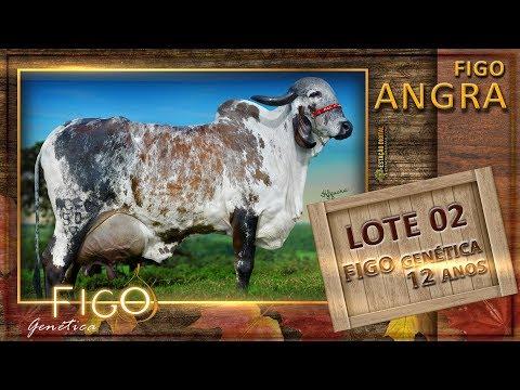 LOTE 02 - FIGO ANGRA - HCFG 50