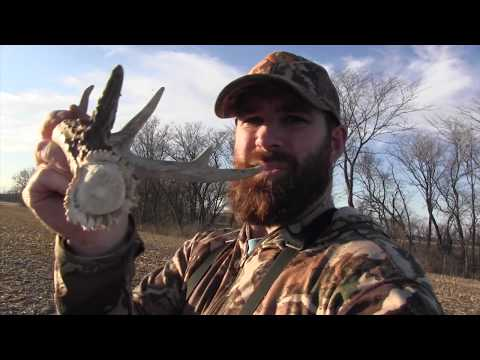 Illinois Whitetail Shed Hunting!