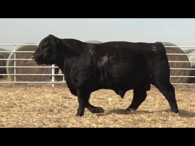 Express Ranches Lot 432