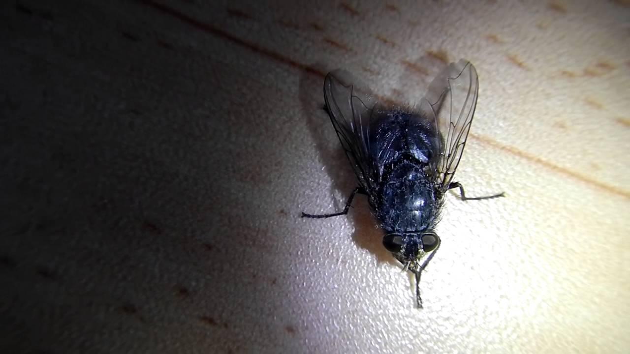 сонная муха фото скандинавском стиле характерным