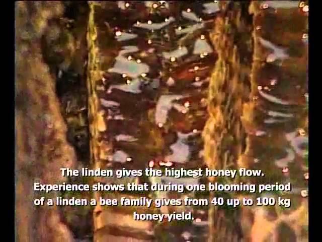 Burzyan Honey