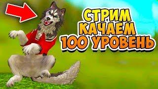 ПРОКАЧИВАЕМ 100 УРОВЕНЬ в игре WildCraft СИМУЛЯТОР ВОЛКА