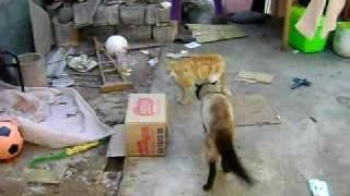 pelea de gatos....