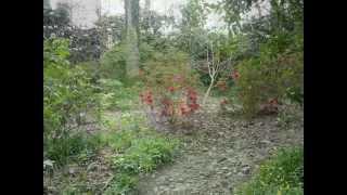 Botanic Southern Ireland