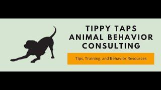 Training Tidbits: Treats and Rewards