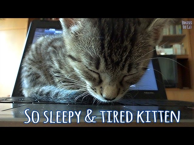 So sleepy & tired kitten